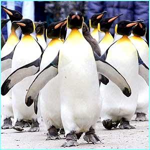 _1716577_penguin2